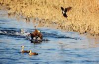 淄博将重点建设马踏湖孝妇河等多处湿地